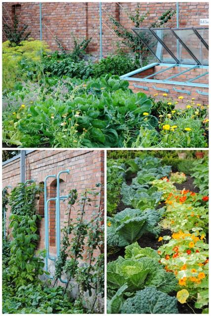Ogród kuchenny