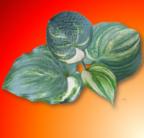 labedzia33 Avatar